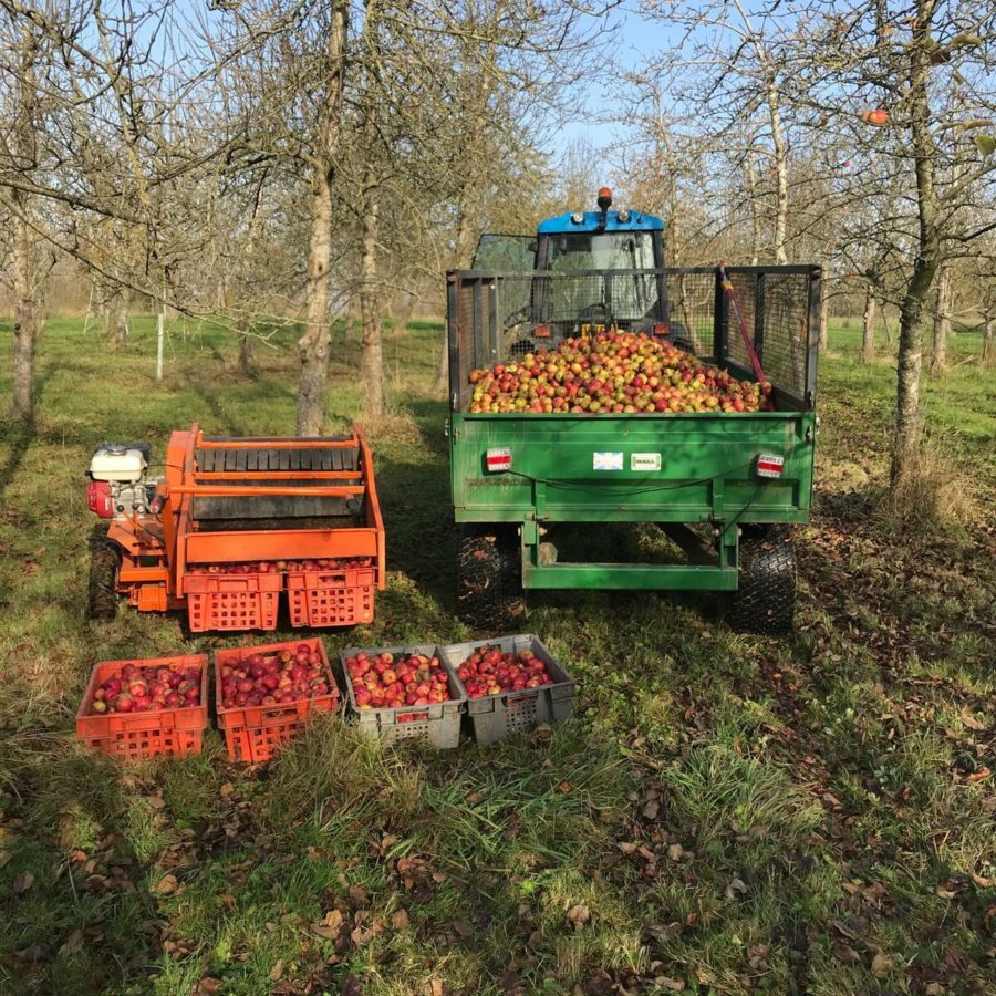Apple Harvest with tractor and trailer full of apples