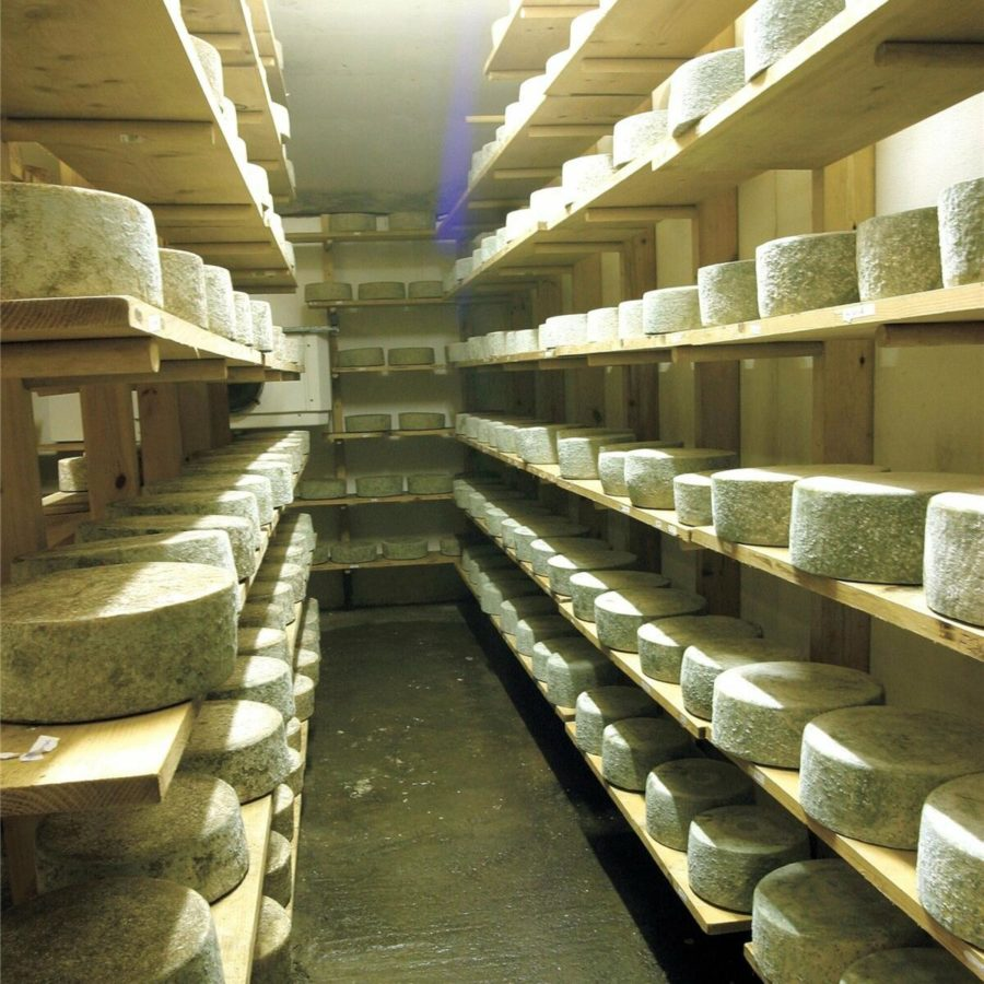 Maturing Hereford Hop Cheese wheels on shelving