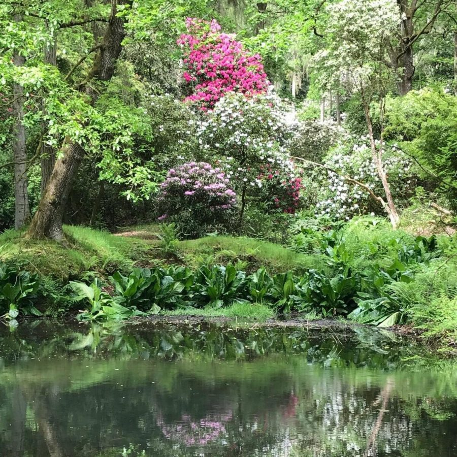 plants and trees reflecting from pond. purples, greens