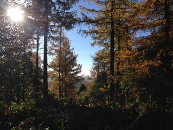 Mortimer Forest trees in autumn, sunshine peeking through