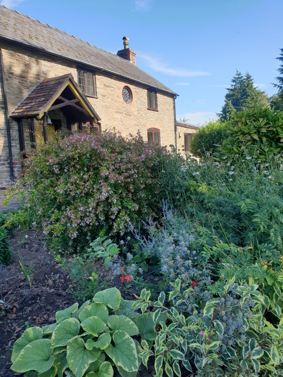 Cottage with shrubs and plants in front